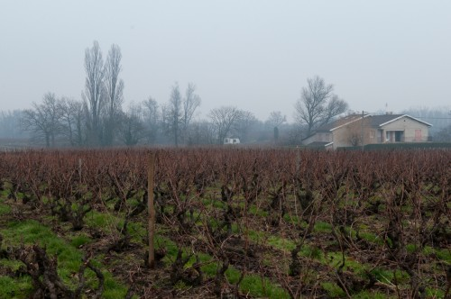 Beaujoulais Region vineyard